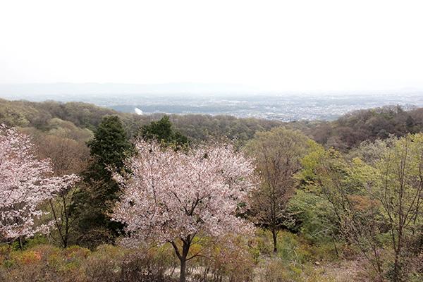 4月の明神山